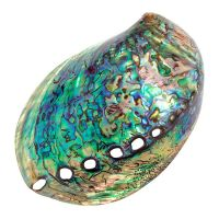 New Zealand Paua Shell. Abalone Shell. Sea Opal Shell