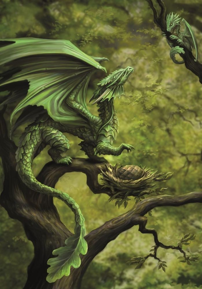 Forest Dragon Greetings Card by Anne Stokes