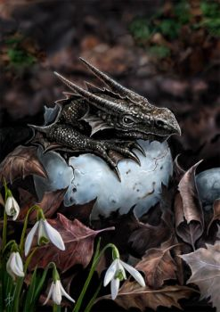 The Hatchling Greetings Card by Anne Stokes