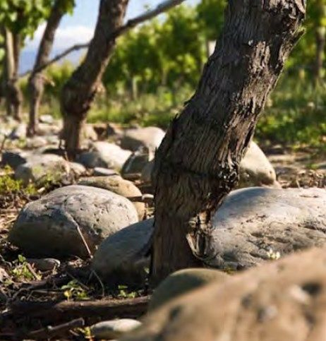 Framingham Wines Tasting (5th June)