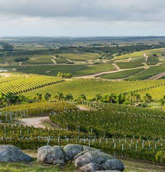 Uruguay Wine Tasting (Thursday 3rd October)