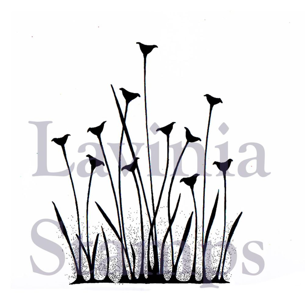 Lavinia stamps - Fairy Buttercups