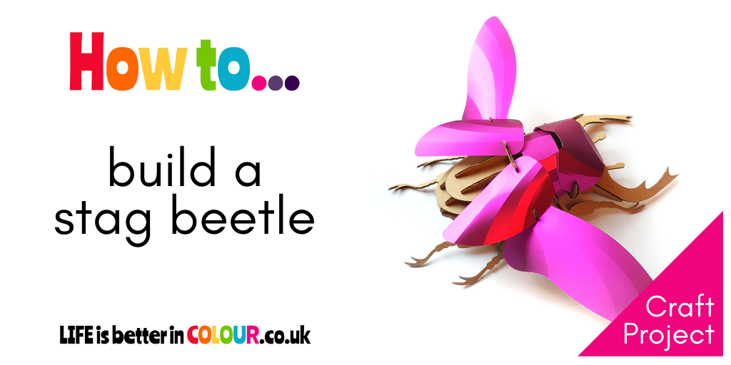 How to build a Stag Beetle