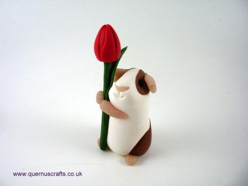 Little Tulip Guinea Pig QL8