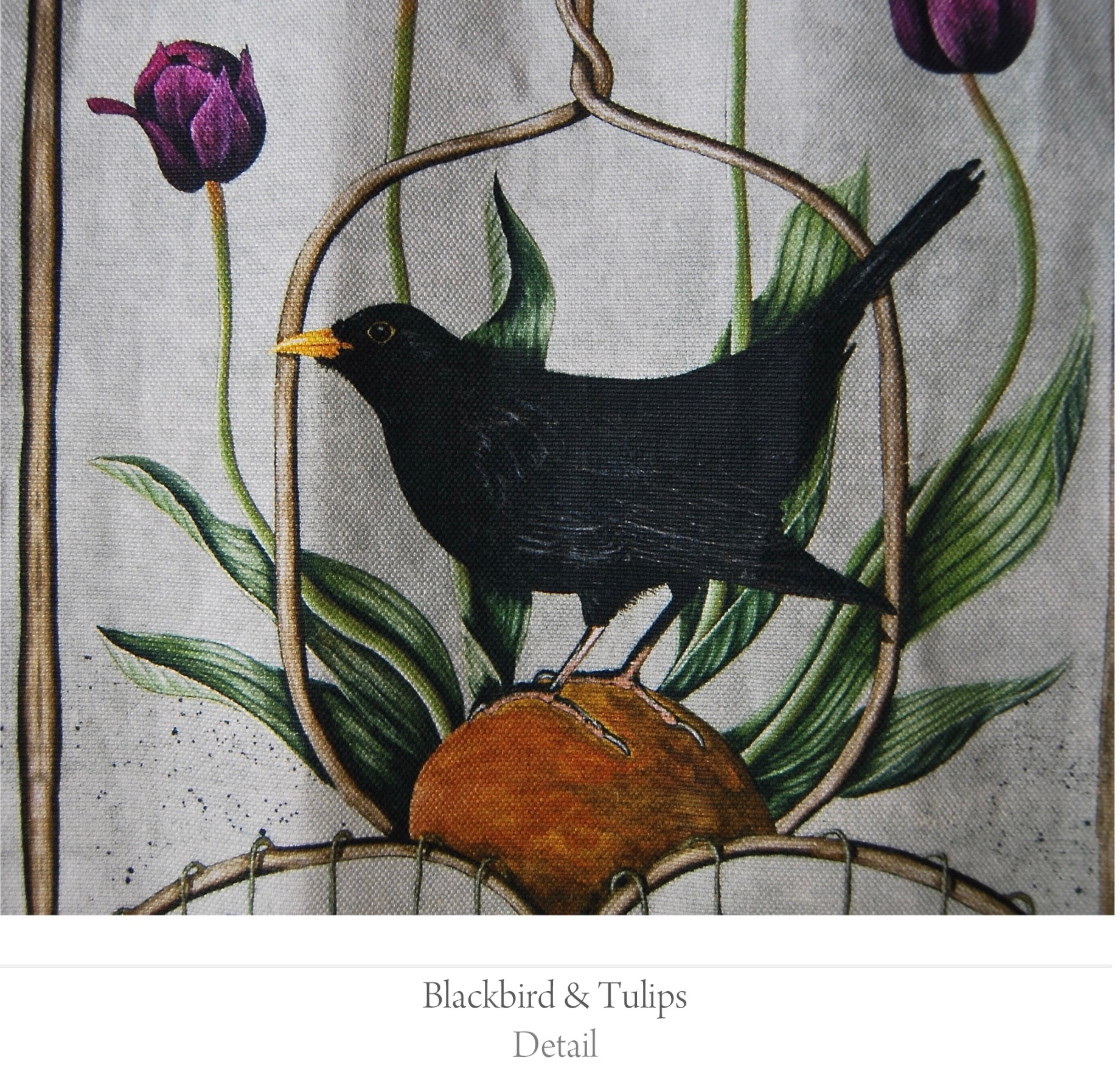 blackbird tulips