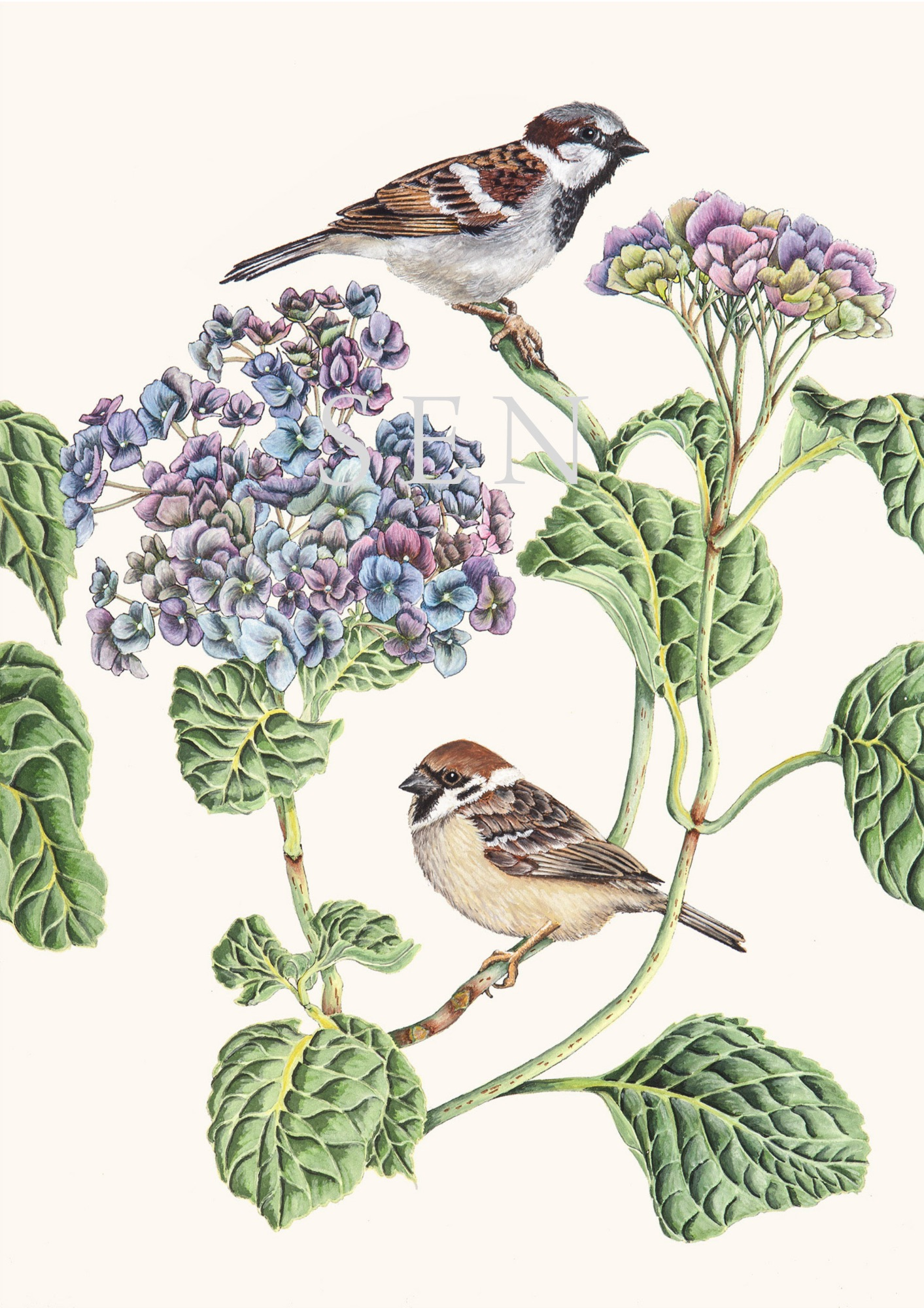 Sparrows bird painting