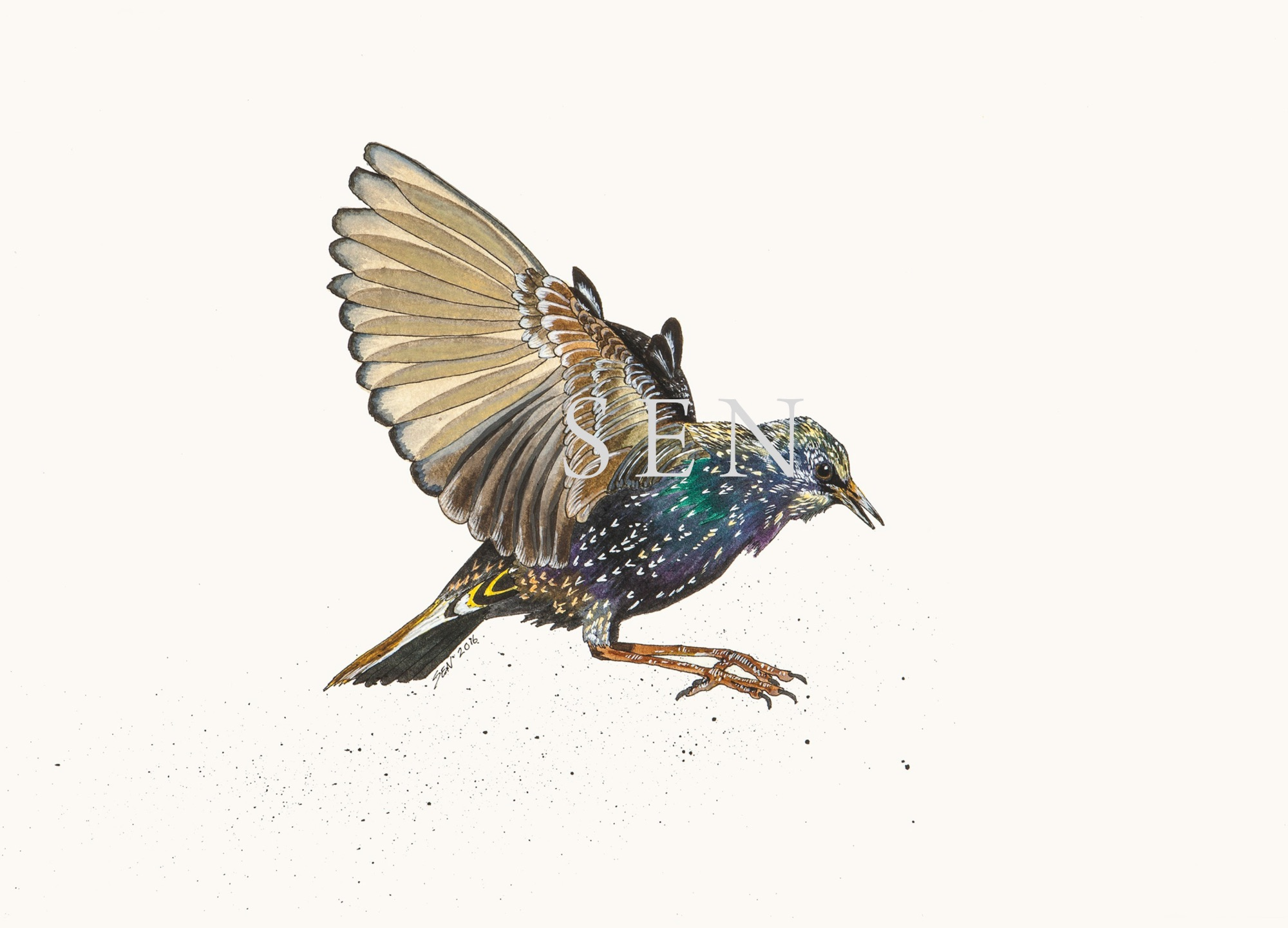 Starling bird painting
