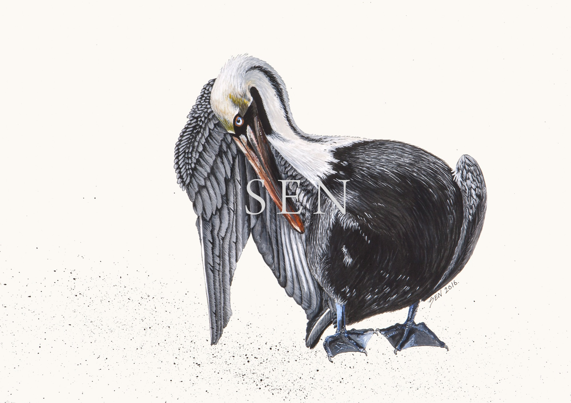 Pelican bird painting