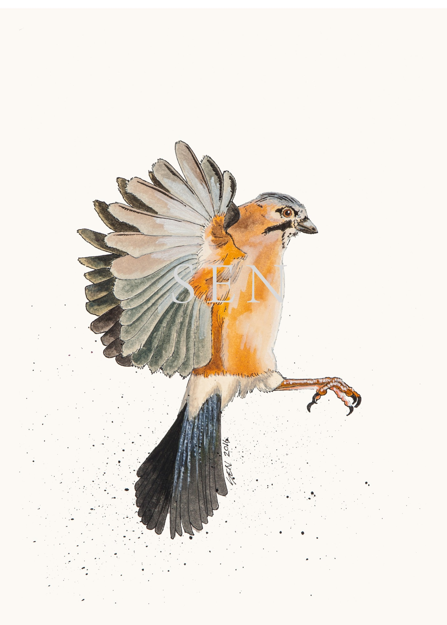 Jay bird painting