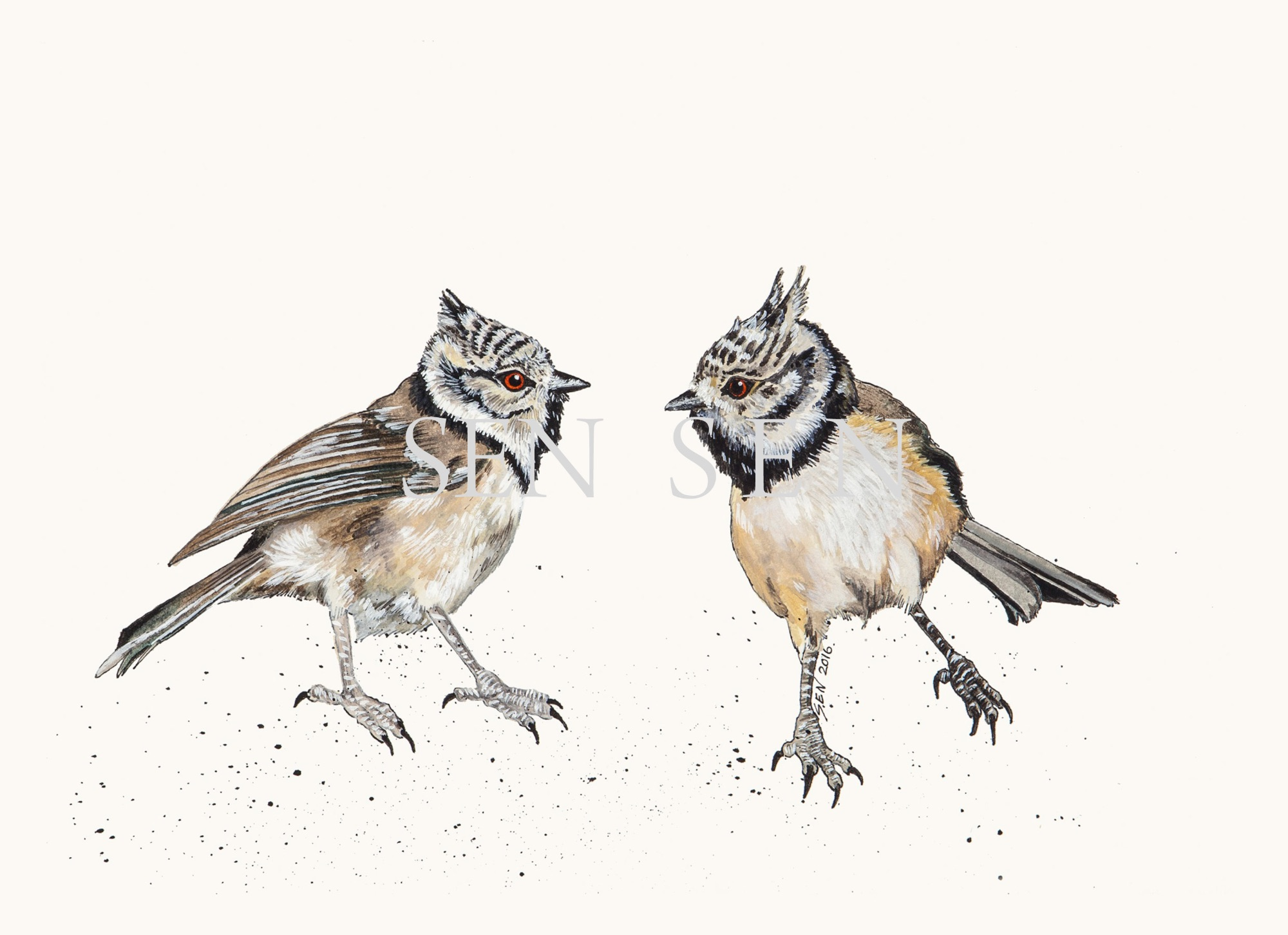 Crested Tit bird painting