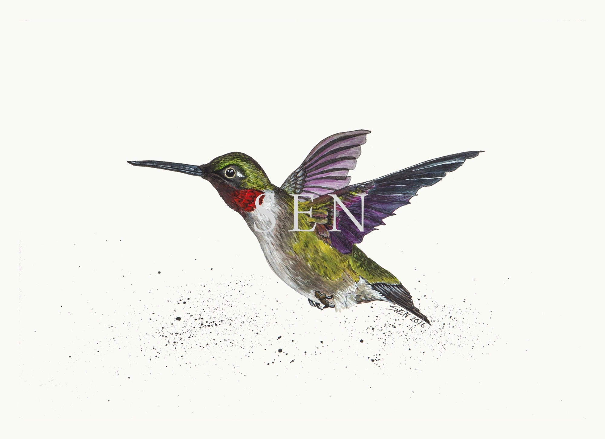 Hummingbird bird painting