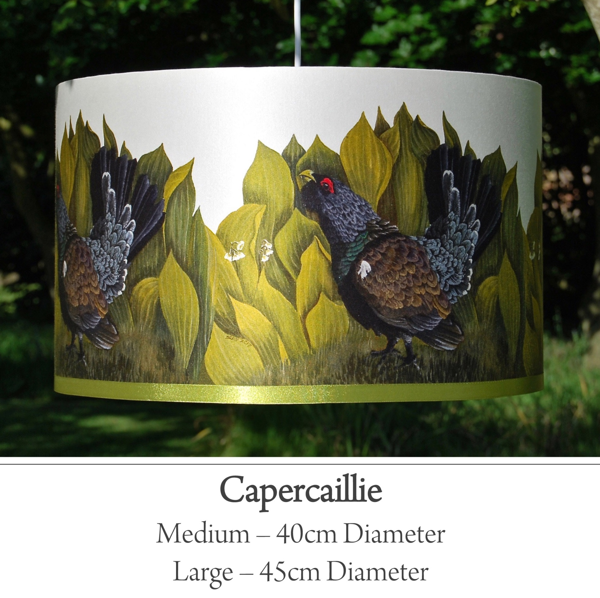 capercaillie bird