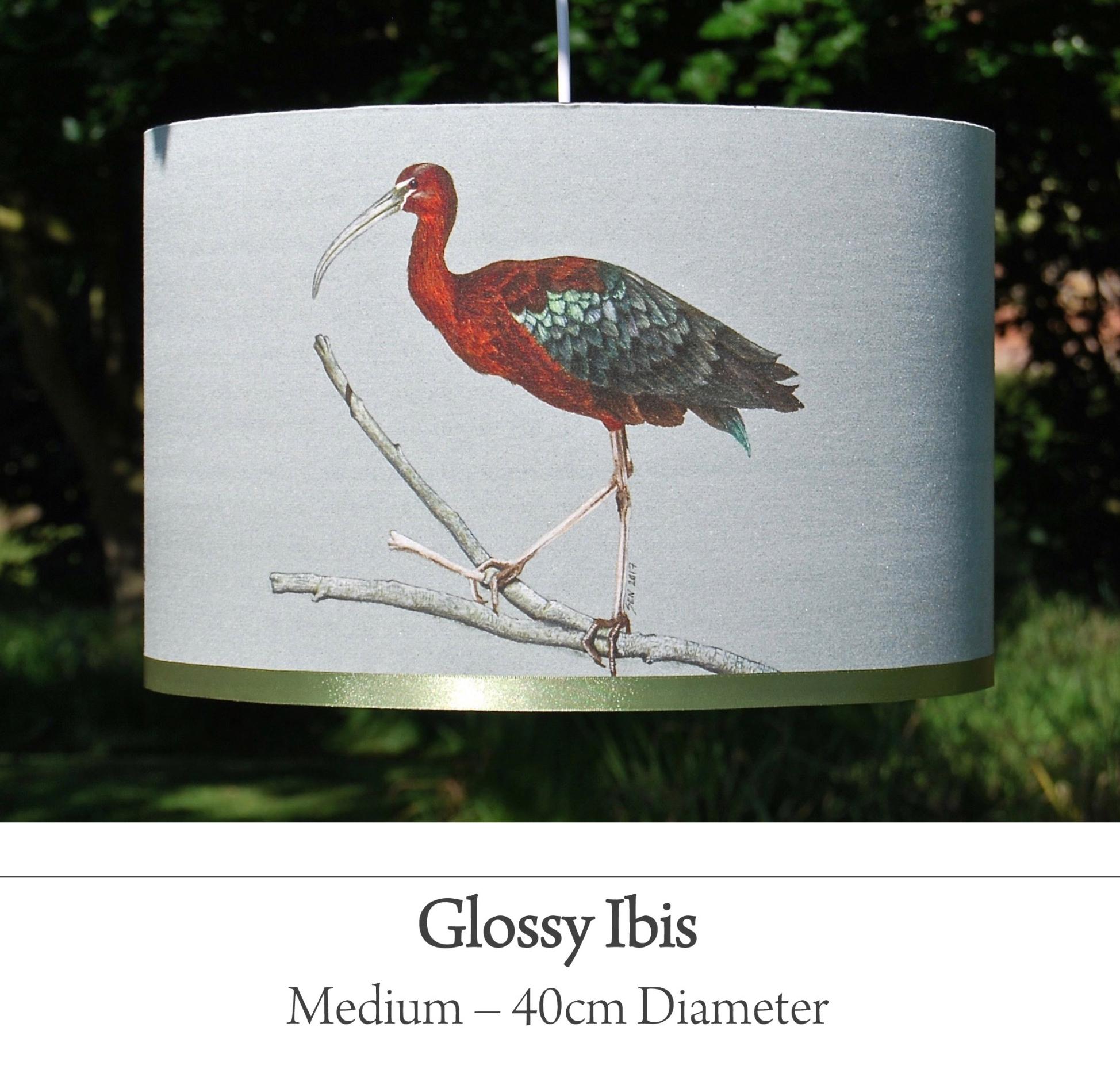 Glossy Ibis bird