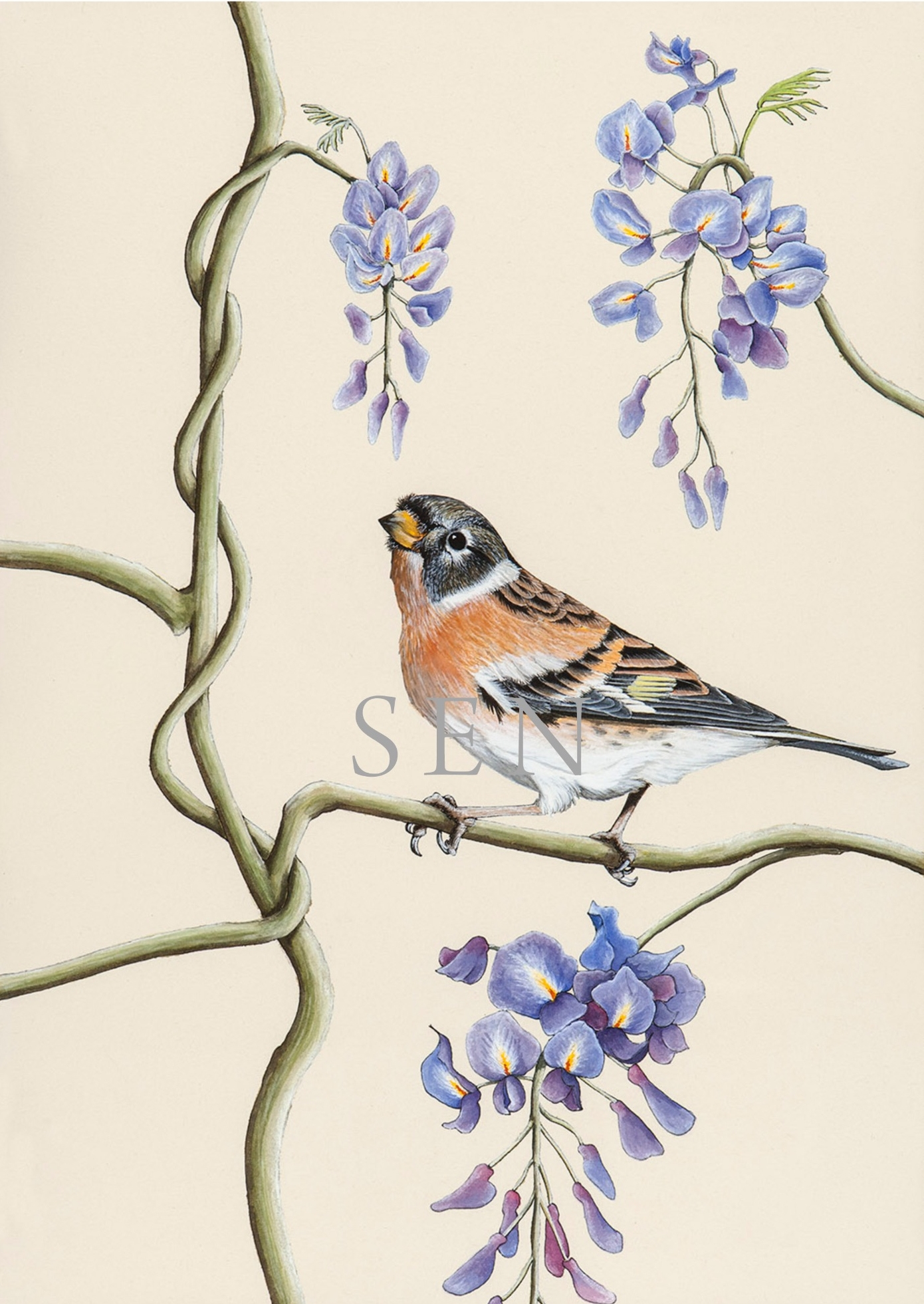Brambling bird painting