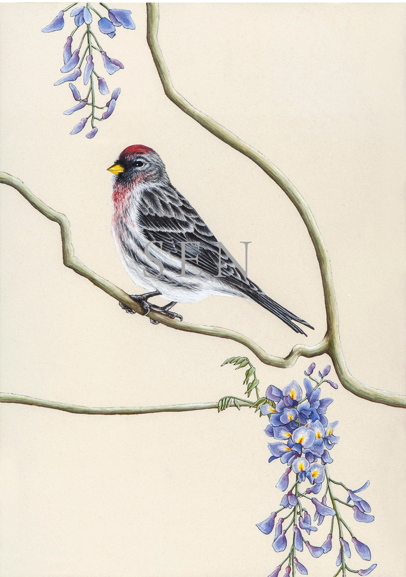Common Redpoll bird painting