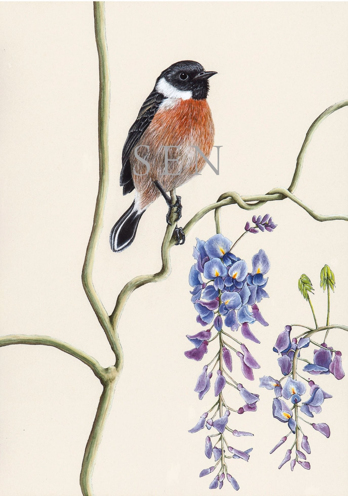 Stonchat bird painting