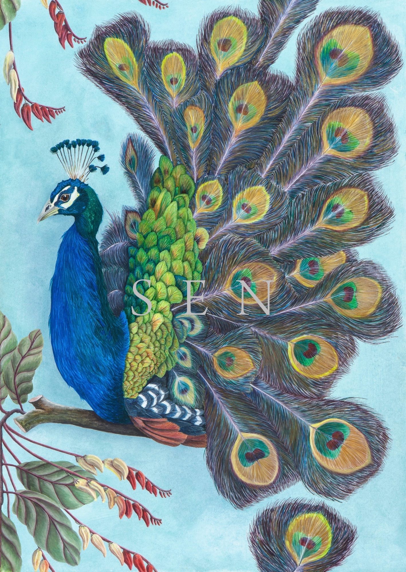 Prussian Peacock bird painting