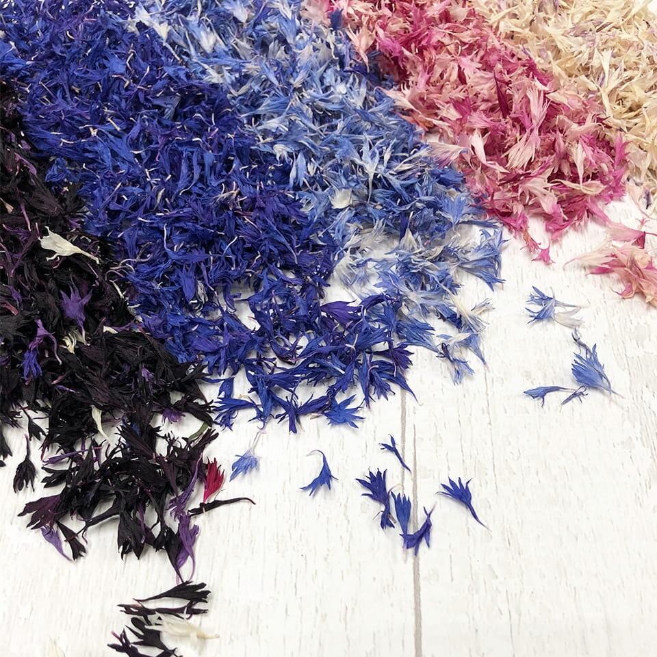 Dried Cornflowers