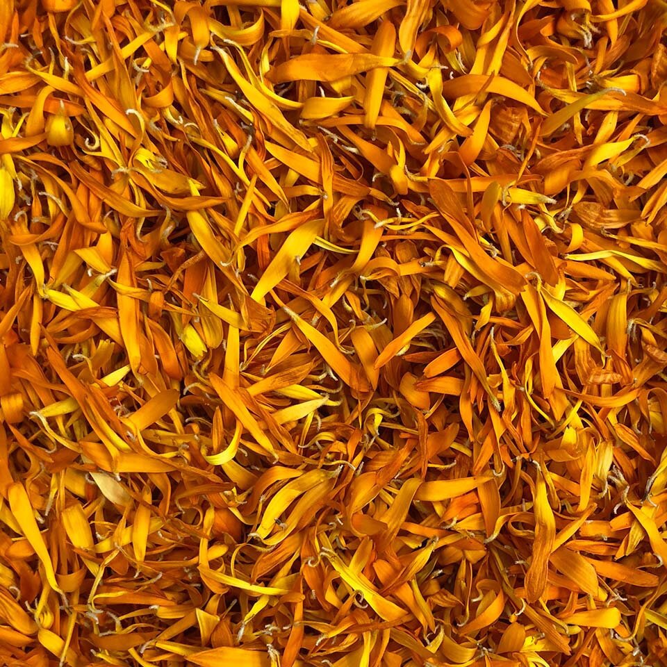 Dried Calendulas