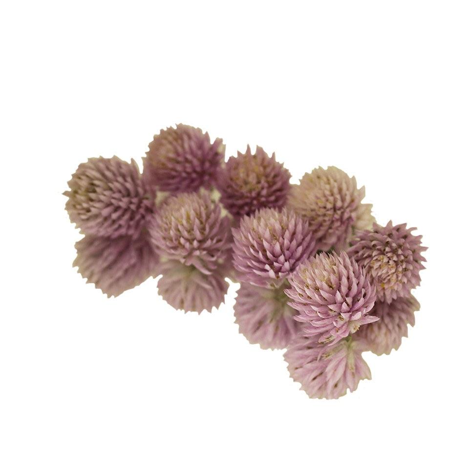 Dried Amaranth Pom Pom - Pink