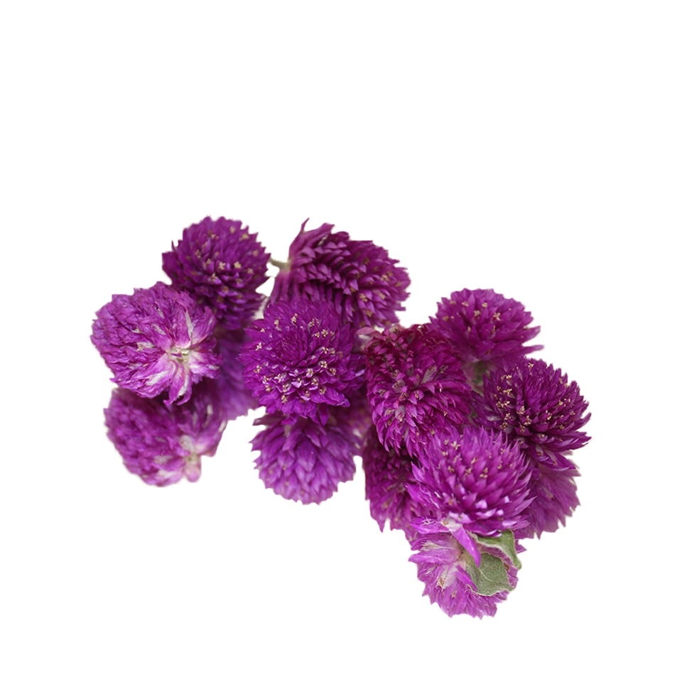 Dried Amaranth Pom Pom - Purple