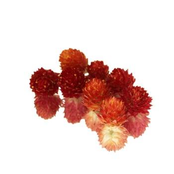 Dried Amaranth Pom Pom - Red