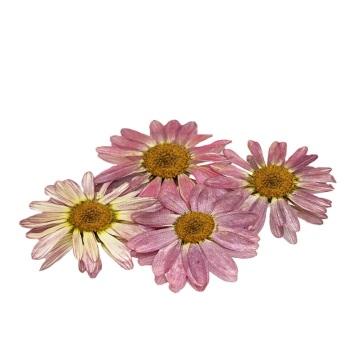 Pressed Mini Daisy