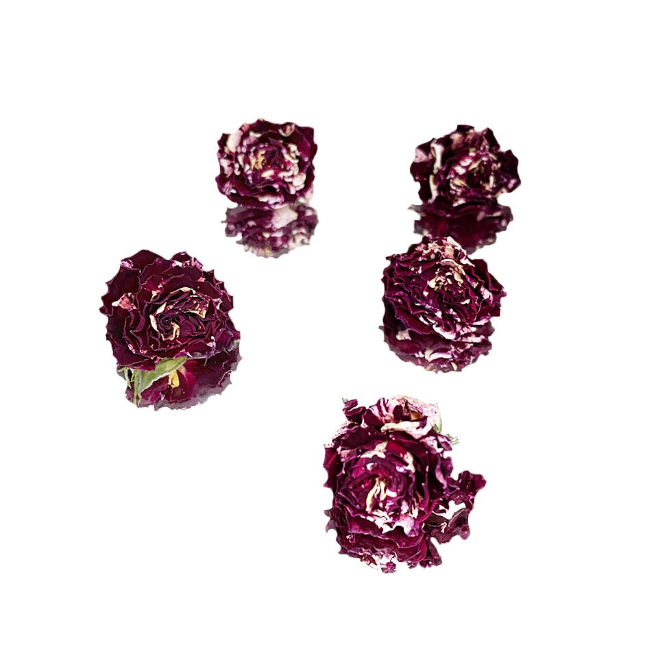 Dried Rose, Red and White