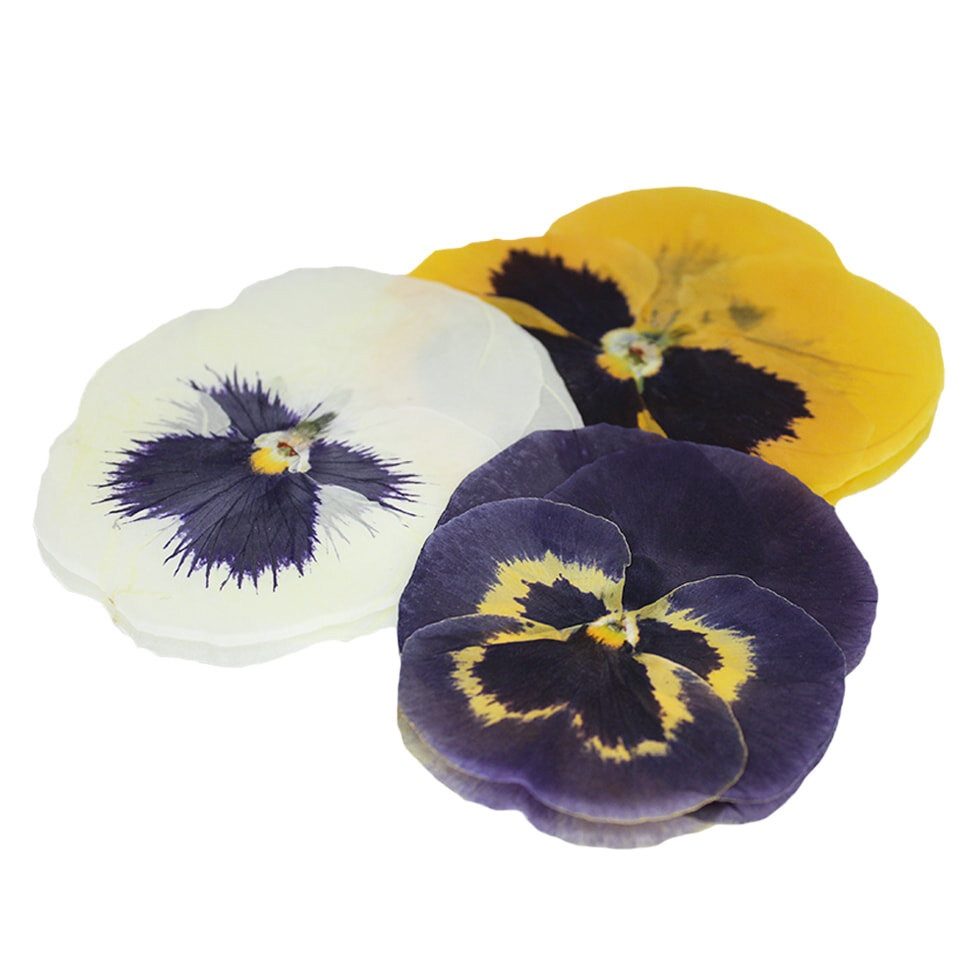 Pressed Giant Pansy