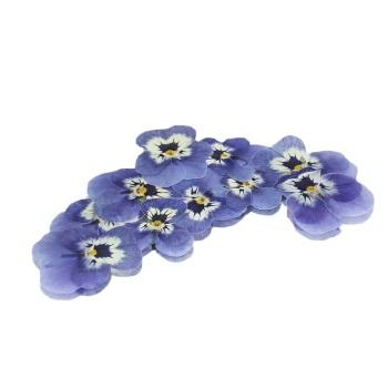 Pressed Viola - Pale Blue