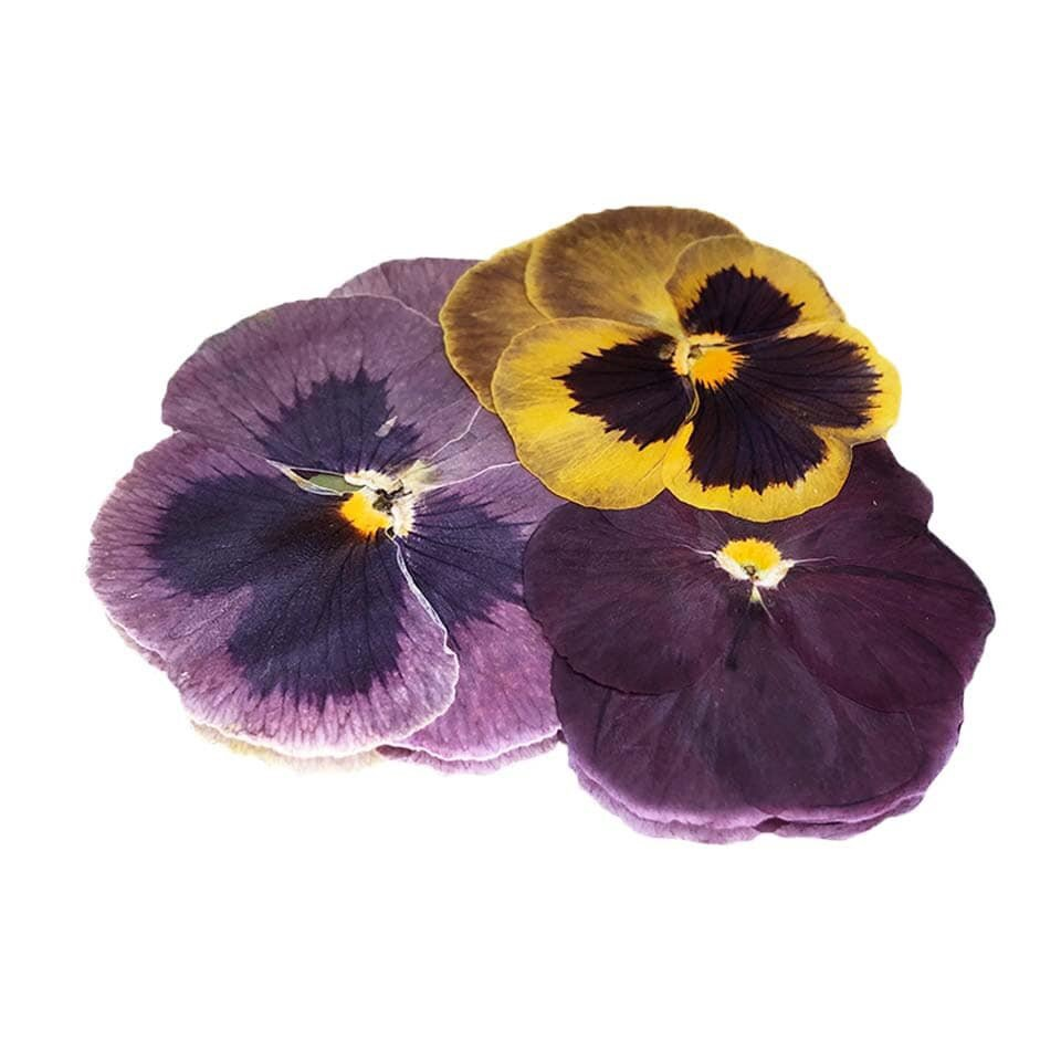 Pressed Pansy