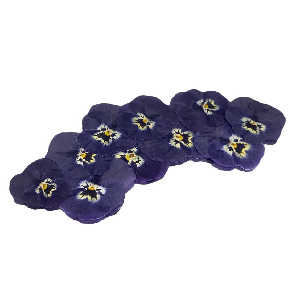 Pressed Viola - Purple and White