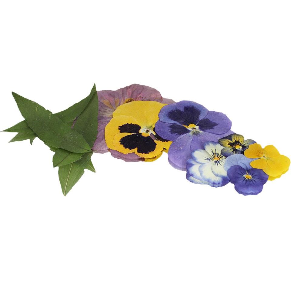 Edible Flower & Leaf Pressed Mix