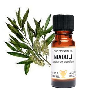 Essential Oil - Niaouli