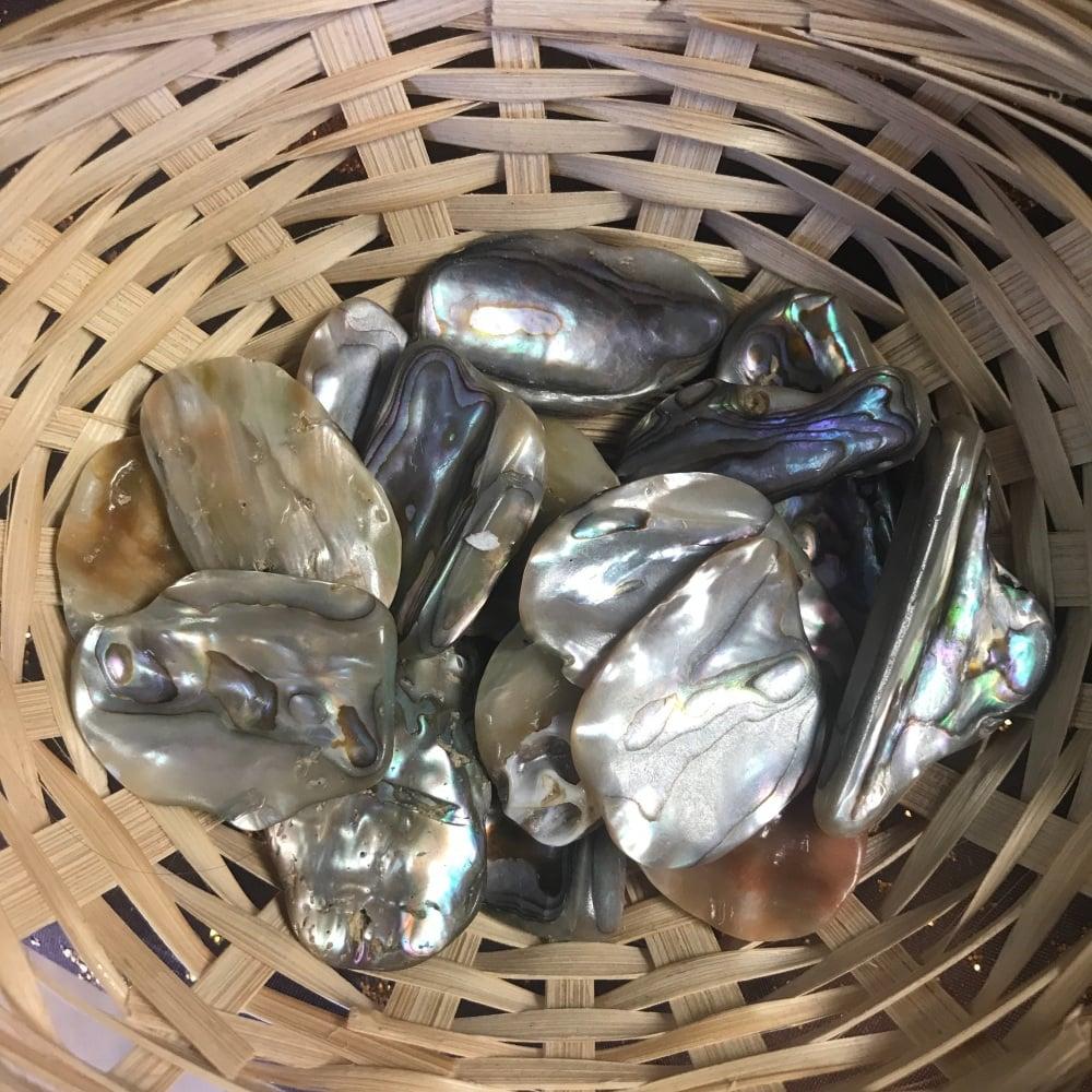Raw Stone - Shell, Abalone Rim