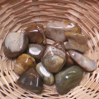 Tumblestone - Wood, Fossilised