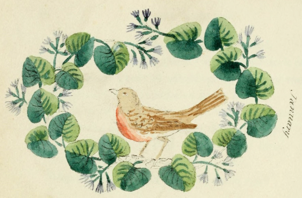 Robin & leaves, Floral Emblems