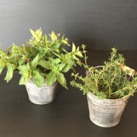 Organic Herbs - Rosemary, Oregano, Lovage, Bay leaves, Sage OR a MIX of all