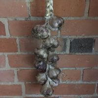 Garlic - Organic Garlic Plait - available in 2 weeks time