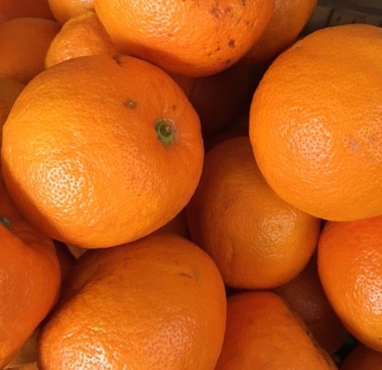 4-5 Organic seville Oranges for marmelade - approximately 700g
