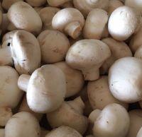 Mushrooms - organic white button mushrooms - 250g