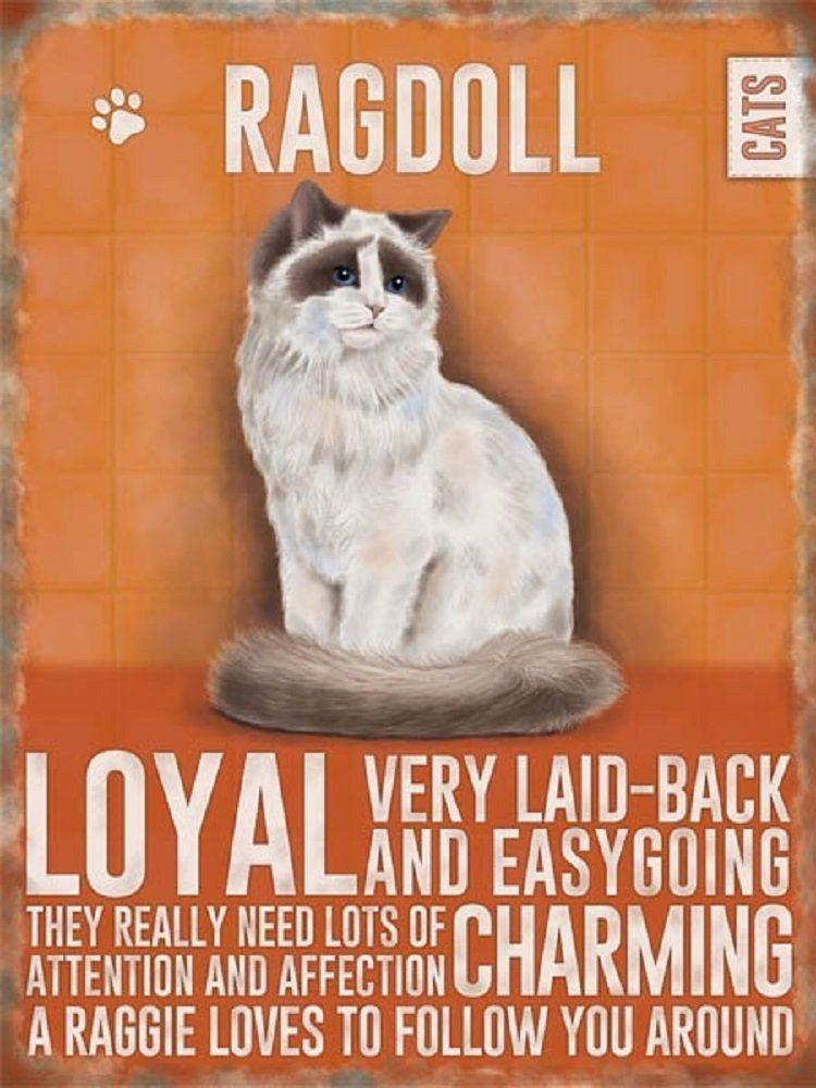 Moggies - Ragdoll Cat Magnet
