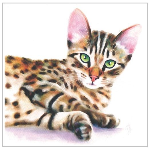 Greetings Card - Tabby Cat
