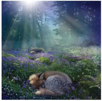"Angie Latham Art - Greetings Card ""Bluebell Dawn"""