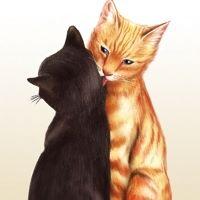 TLC Cats