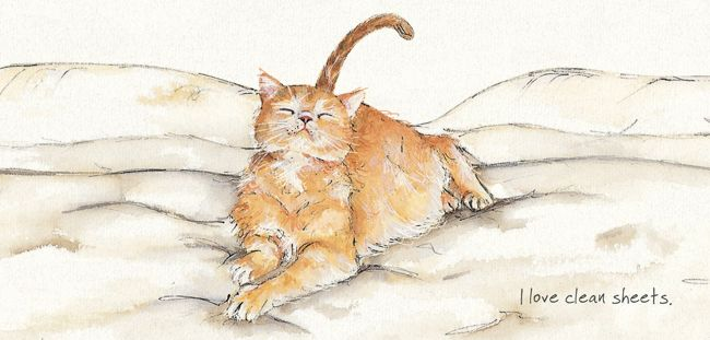 Magnificent Moggies Greetings Card - Clean Sheets