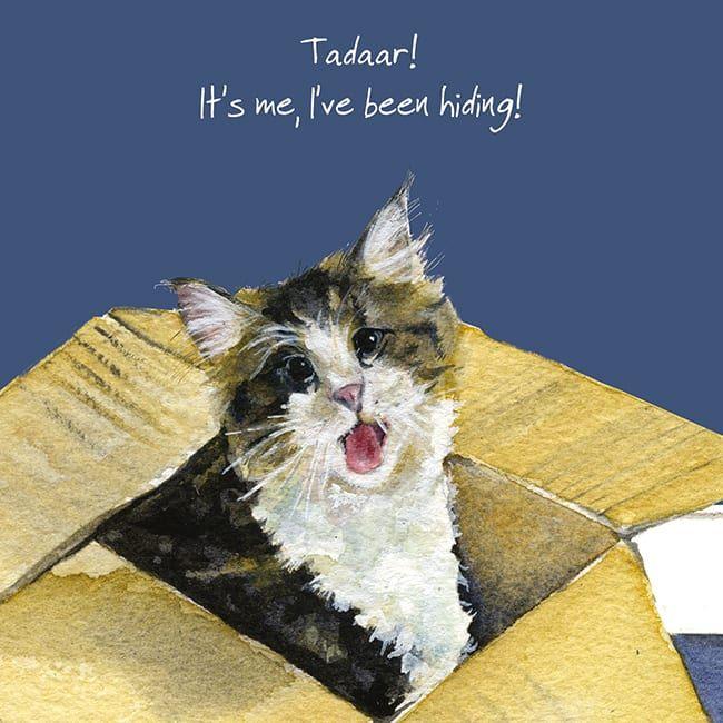 Ta Da.. Maine Coon Cat Greetings Card