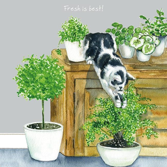 Happy Cat Greeting Card – Fresh Is Best