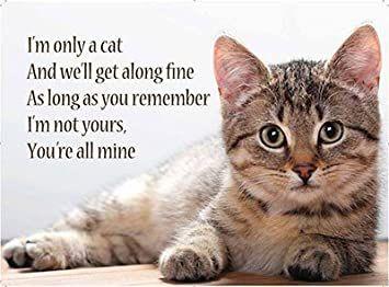 Mini Metal Dangler Metal Sign - I'm Only a Cat
