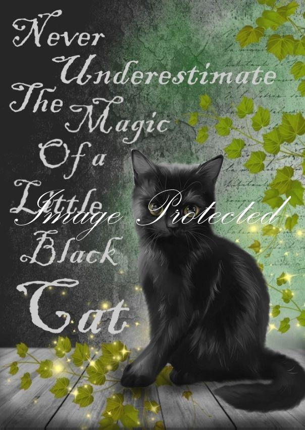 Never Under Estimate The Magic Of a Little Black Cat